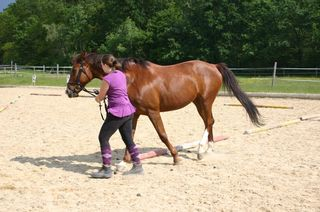 Mach deine Leidenschaft für Pferde zum Beruf und geh auf die Landwirtschaftliche Fachschule Güssing.