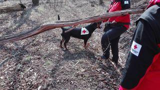 Suche nach der Vermissten mit Suchhunden (Symbolbild).