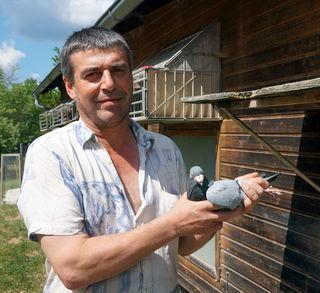 Seit 33 Jahren züchtet Ernst Nösterer Brieftauben. Pro Jahr werden etwa 40 Tauben geboren.