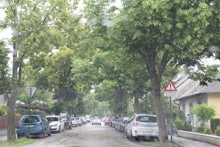 Wermutstropfen: Die Bäume fallen voraussichtlich.