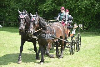 Christine Brunner aus Eggersdorf mit ihren Norikern Startete für die Pferdefreunde Rabnitztal