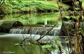 Der Brucker Harrachpark besticht durch seinen exotischen Baumbestand.