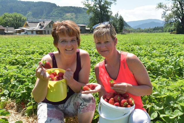Irmgard (li.) und Eva-Maria holen sich die Erdbeeren frisch vom Feld. Daraus werden dann Marmelade und Saft gemacht