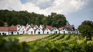 Fotocredits: Regina Courtier - Den Galgen hat man längst abmontiert, im 19. Jahrhundert haben Weinbauern diese Erhebung für sich entdeckt, heute ist er bliebter Treff für Ruhe- und Weinsuchende und wird fast ausschließlich von Hobbywinzern bewirtschaftet - ein wunderbares Ausflugsziel!