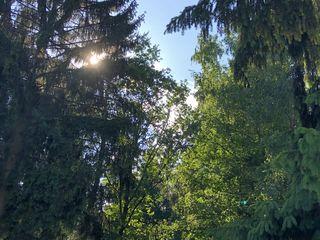 Der Wald hat viele Funktionen, die dem Menschen zugute kommen