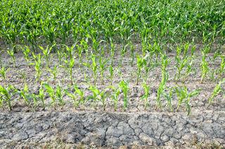 Fehlt der Niederschlag, wird dies vor allem bei den Maisfeldern und Wiesen für die Bauern spürbar.