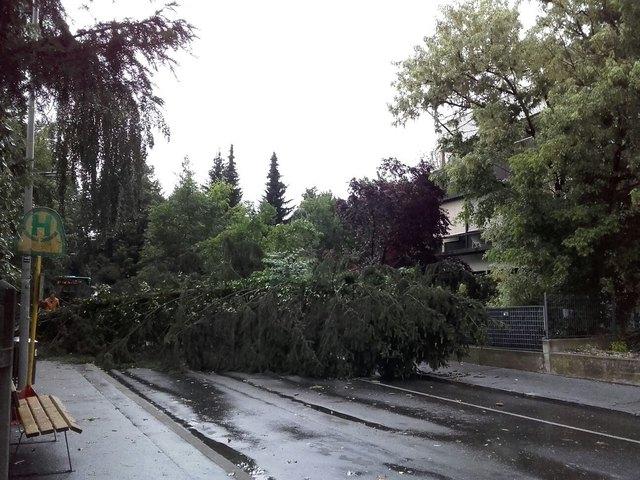 Achtung, Baum fällt: Kein Einzelfall gestern Abend in Graz.
