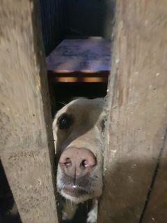 In diesem Keller fristete Asta für mehrere Tage ihr Dasein