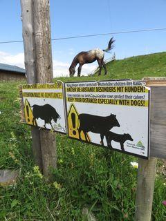 """Auch an der Ebbser Ritzaualm finden sich Warnschilder im Almgebiet, um Wanderer auf Gefahren aufmerksam zu machen, auch wenn hinter dem Zaun augenscheinlich jemand Anderes """"lauert""""."""