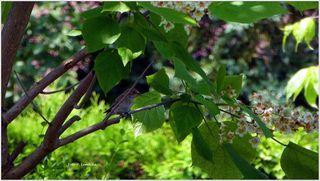 Eine kurze Rast auf dem Trompetenbaum, dann geht es wieder zurück zum Nest und zu den Babys.
