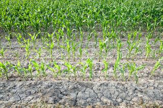 Die Trockenheit setzt Landwirten im Sauwald enorm zu. Einbußen bei Gras und Getreide werden schon jetzt deutlich.