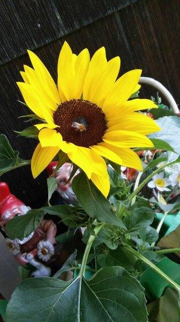 Blumen sind das Lächeln der Natur; es geht auch ohne sie, aber nicht so gut !   (Max Reger - deutscher Komponist)
