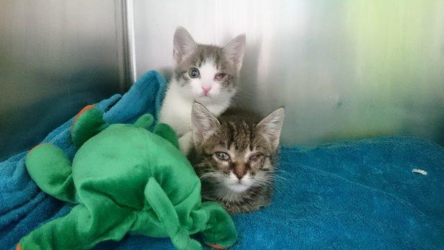 Die Kätzchen sind schwer krank und müssen noch länger medizinisch betreut werden