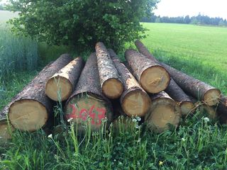 Ein vertrautes Bild in der Region: Allerorts lagern Stapel mit Käferholz bereit zum Abtransport.