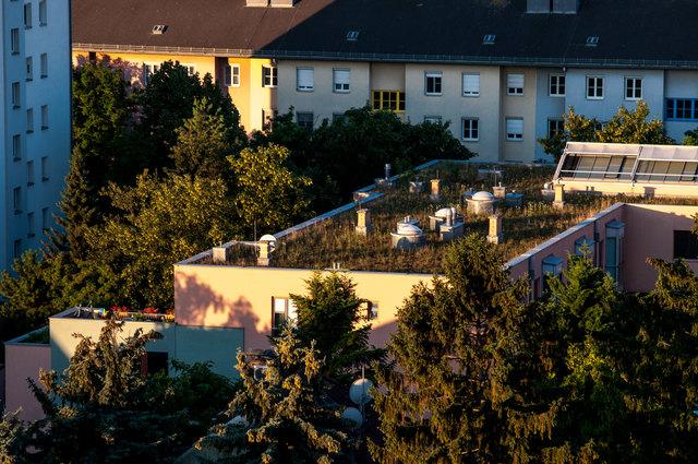 .. das begrünte Dach vom Seniorenwohnheim in der Altkettnenhofer Straße.....