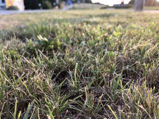 Grünstreifen und öffentliche bewachsene Flächen sollen laut Beobachtern in vierzehntägigem Rhythmus gemäht werden.