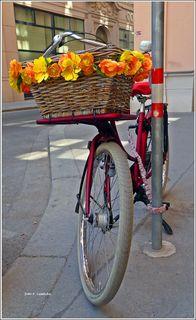 Die Blumen brauchen kein Wasser und verwelken nicht.