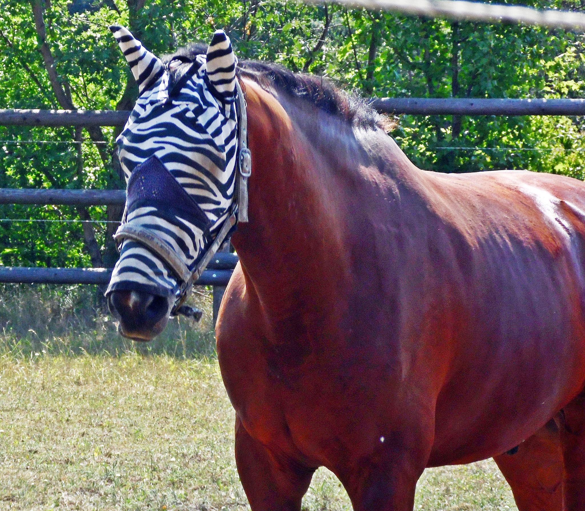 Sind die beiden Zebras schwul was meint ihr