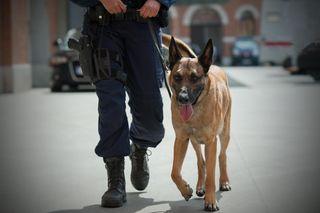 Die Wiener Polizeihunde werden in Strebersdorf ausgebildet. Nun steht eine Modernisierung der Anlage auf dem Plan.