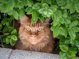 eine Nachbarkatze hat ein ruhiges Platzerl vor unserer Terasse gefunden