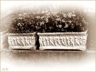 Alte Steintröge mit umlaufenden Puttidekor, hier mit verschiedenen Wachsbegonien bepflanzt