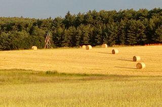 Die Getreideernte ist im Gange und ab sofort sieht man auf den abgeernteten Feldern wieder die großen Strohballen liegen.