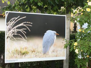 Doblhoffpark, Rosarium