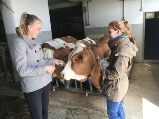 Theresa Rebhandl (l.) und Veronika Wagner (r.) mit Mitteln für die Tiergesundheit im Rinderstall