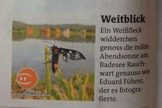 Herzlichen Dank für die Veröffentlichung in der aktuellen Ausgabe  (Güssing/Jennersdorf)