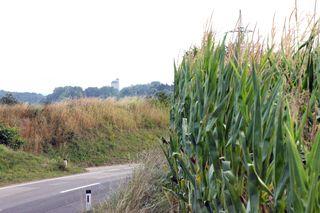 Hoher Mais kann auf Landstraßen Sicht einschränken.