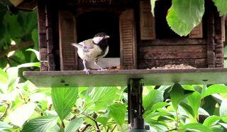 Denn jetzt gehört das Vogel Futterhaus mir. Keiner kommt jetzt aha.