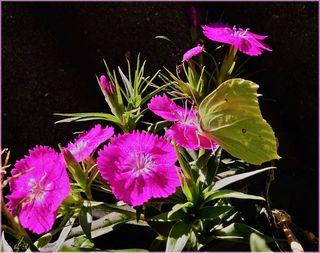 Leben allein genügt nicht, sagte der Schmetterling, Sonnenschein, Freiheit und eine kleine Blume muß man auch haben.  Hans Christian Andersen (1805 - 1875)