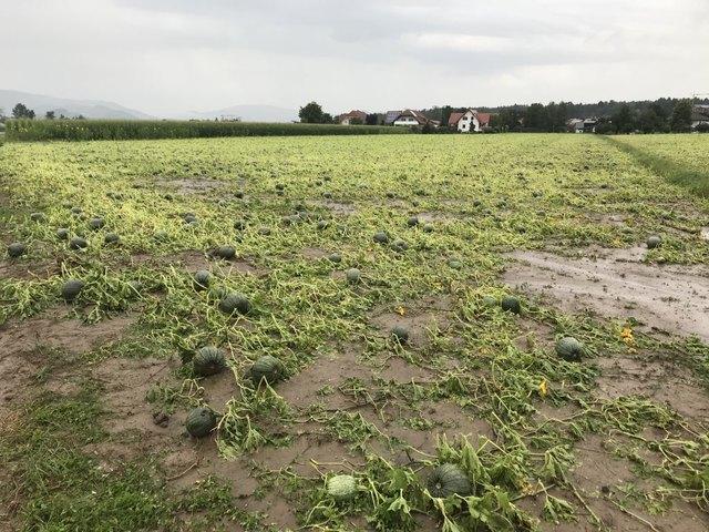 Bilder der Verwüstung: Das Hagelunwetter vergangene Woche richtete im Bezirk Hartberg-Fürstenfeld große Schäden an.