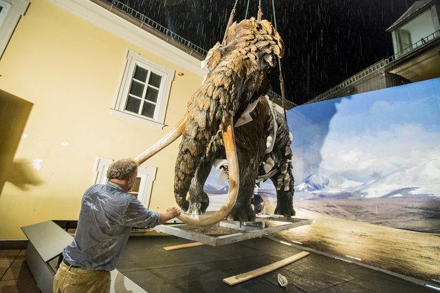 """""""Über den Dächern von Salzburg: Baukran hebt lebensgroßes Mammut in den Innenhof des Haus der Natur"""