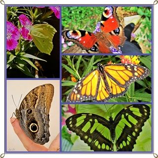 Der Schmetterling vergißt oft, daß er einmal eine Raupe war.  Aus Schweden