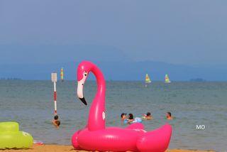 Flamingo am Strand, Lignano Sabbiadoro, Italien, Adria