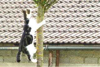 """Dieses Leserfoto zeigt Kater Jimmy """"in Action"""". """"Mit einem Satz sprang er plötzlich einen Meter hoch auf den Baum"""", erzählt sein Besitzer Johann Hammerer aus Saiga Hans stolz."""