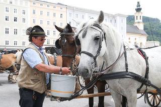 Fiaker Fredl von der Fiakerei Süß gibt seinen Pferden vor der nächsten Runde noch zu trinken.