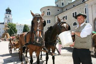 Auch die Pferde der Fiakerfahrer in Salzburg am Residenzplatz brauchen dringen Wasser.
