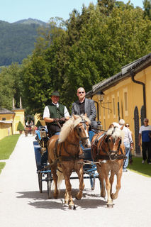Die Fiaker machen auch Ausflüge zum Schloss Hellbrunn.