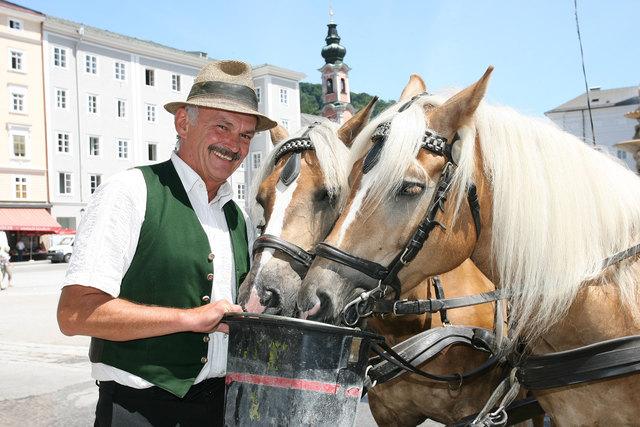 Der Fiaker reicht seinen Pferden Wasser.