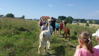 Unterwegs mit Alpakas