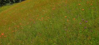 Ein Teil der Wiese... Bild 1