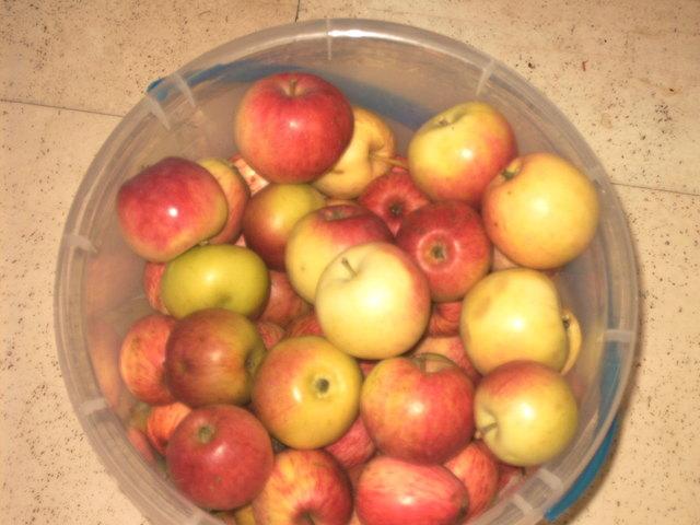 Ungespritzte Äpfel aus dem eigenen Garten sind schmackhaft und gesund! Guten Appetit!