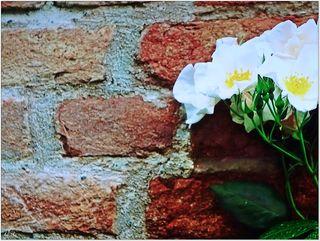 Einsamkeit, du bist die liebe Mauer um den stillen Garten unseres Glücks!  August Pauly (1850 - 1914)