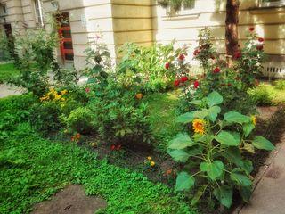 Verschandelung und Zerstörung ersuchen um keine Genehmigung. Gestaltung und Verschönerung bedürfen einer Zustimmung der Hausverwaltung. Die Verantwortliche dieser Blumenoase hat sie jedenfalls.
