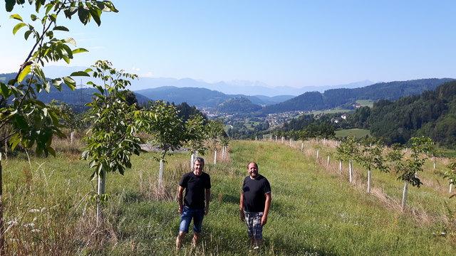 Gemeinsam besitzen die beiden Griffner rund 1.000 Walnussbäume. Für die Produktion ihrer Produkte wollen sie aber auch Nüsse von regionalen Nussbaumbesitzern abkaufen