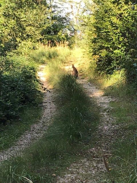 Ungewöhnlicher Anblick: Im Wald von Munderfing hüpft ein Känguru munter herum.