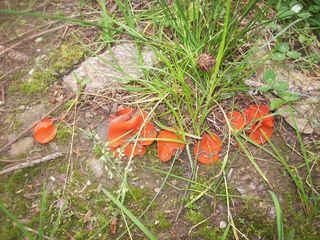 Solche Pilze habe ich noch nie gesehen.