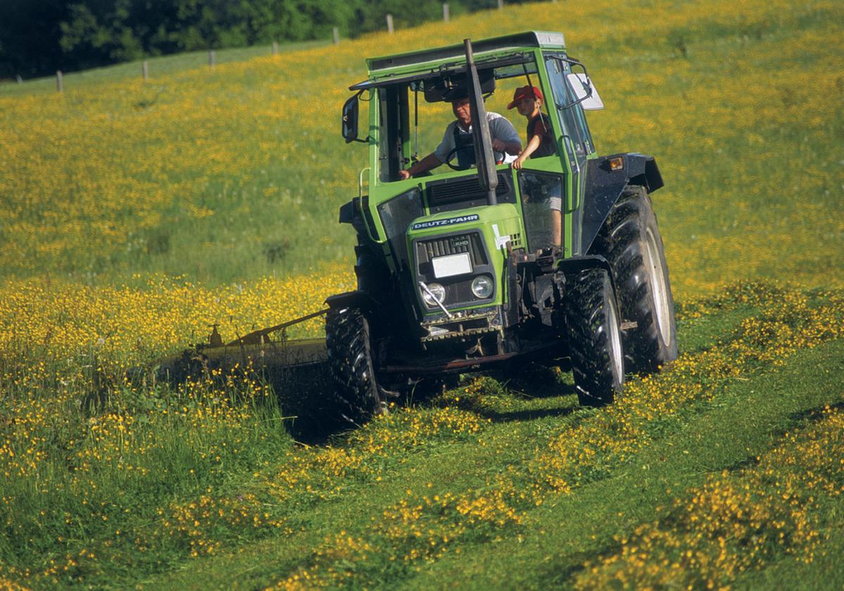 Als Totalherbizid tötet Glyphosat jede nicht gentechnisch veränderte Pflanze auf dem gespritzten Feld ab.